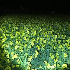 田原市ロングランホームブログ写真菜の花